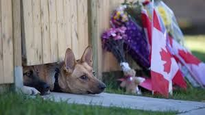 Image result for nathan cirillo dogs