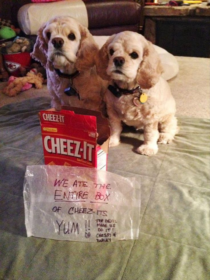 Funny Partners In Crime (Animal Edition) – 31 Pics