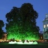 Berlin's Glowing Tree Concert Plays Ambient Nature Songs as Chestnuts Fall from Above