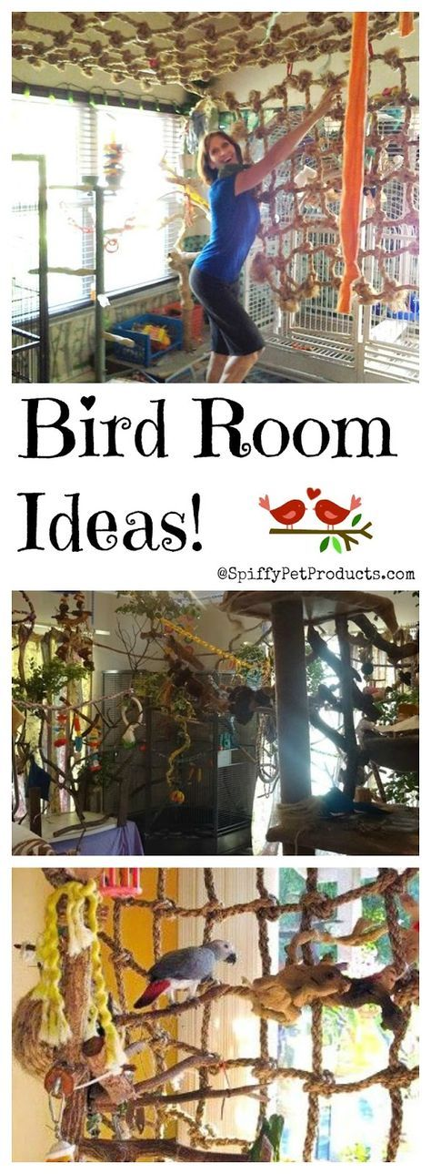 Awesome DIY pet bird room ideas to keep your parrot entertained and happy.