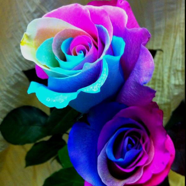 117 best decorative tie dye flowers images on pinterest for Rainbow dyed roses