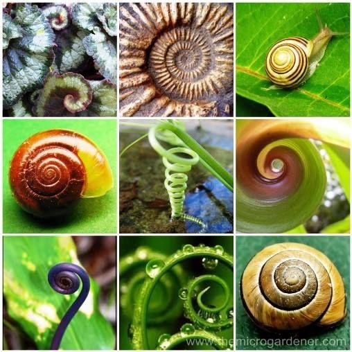 Spirales de Nature...  Tout est lié ! La spirale est notamment le symbole de l'ascension, de la rotation, de l'évolution... Les humains tentent de rationaliser cela avec la suite de fibonacci et le nombre d'or