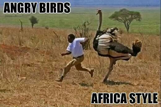 Suppose this is why women are referred to as BIRDS in SA