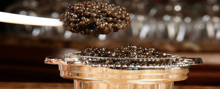 caviar is a good starter we offer #caviar #belugacaviar #ossetracaviar #sevrugacaviar #kalugacaviar #freshcaviar #finecaviar #bestcaviar #wildcaviar #farmcaviar #sturgeoncaviar #blackcaviar #importedcaviar #domesticcaviar #americancaviar #chinesecaviar #frenchcaviar #paddlefishcaviar #hacklebackcaviar #salmoncaviar #gourmetcaviar @ https://houseofcaviarandfinefoods.com/caviar