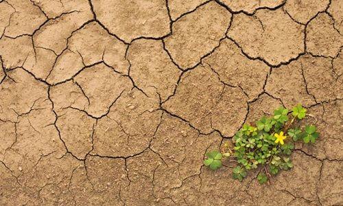 A rischio la vita sulla terra per via del cambiamento climatico.