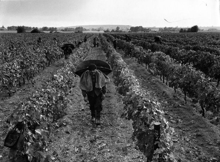 Robert Doisneau // Wine - Vendange,Cognac Remy Martin Octobre, 1961.