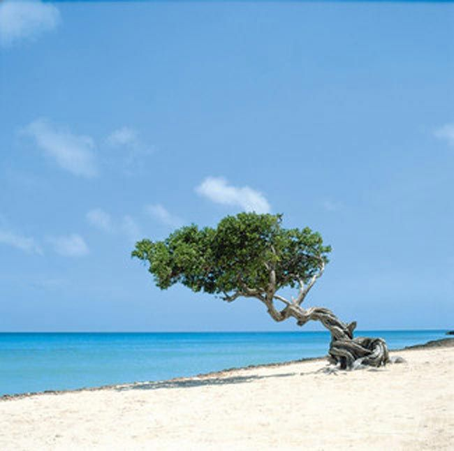 Done: Aruba / Our Honeymoon! It was A-MAZING!