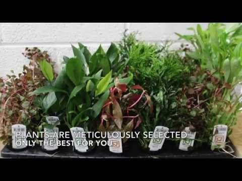 Tropical Aquarium / Fish Tank Plants for Sale, CO2 Sets, Fertilisers, and more – Aqua Essentials
