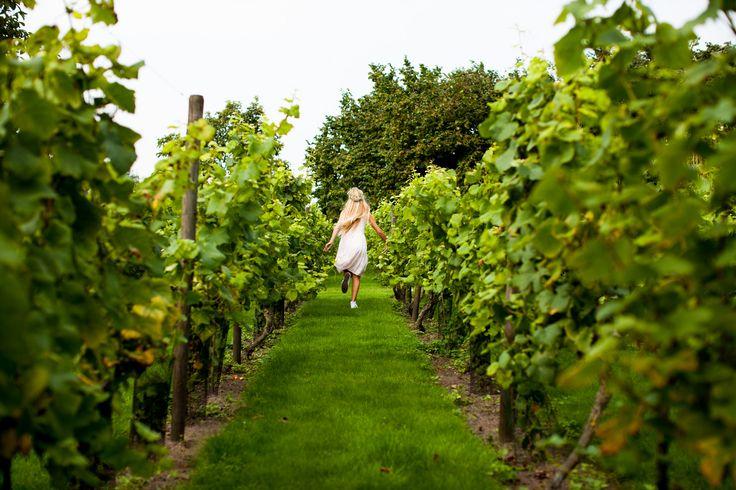 Bruiloft bij wijngaard Domaine d'Heerstaayen | de Kievit Bruiloften