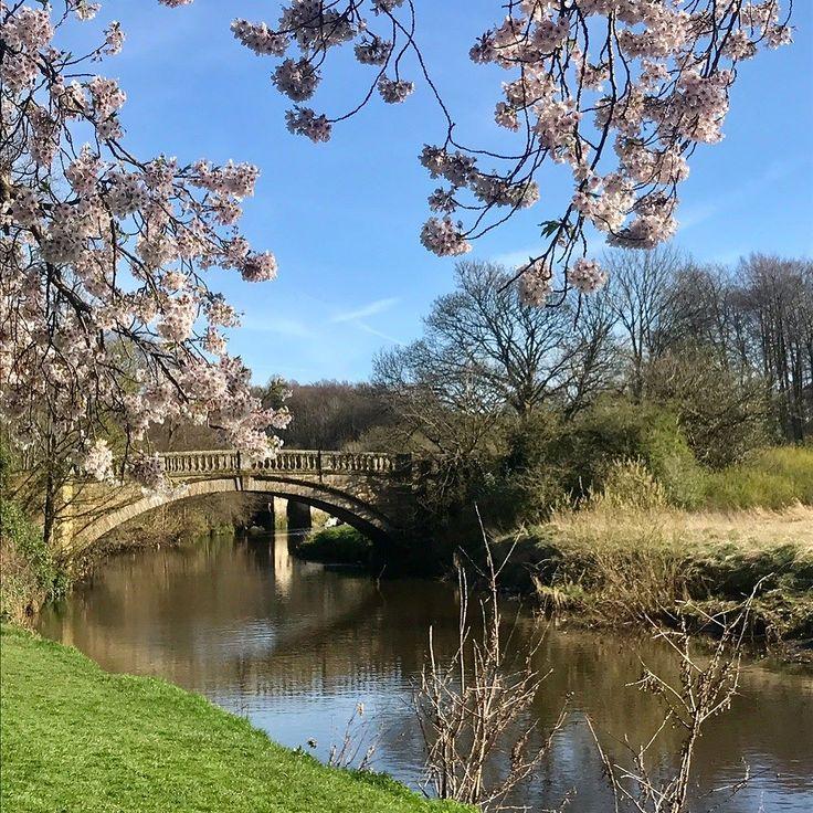 Enjoying the blue skies while they last #glasgow #scotland #instaglasgow #blossoms #horses #dogs #spring #springtime #blueskies #poodles #pollockpark #pollockhouse