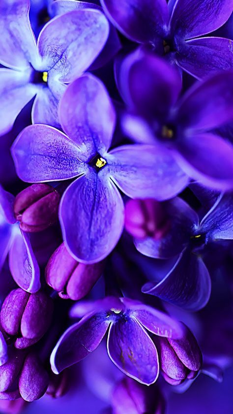 46 Ideas Home Screen Wallpapers Aesthetic Purple Purple Flowers Wallpaper Blue Flower Wallpaper Purple Flowers Best lilac flowers hd wallpapers free