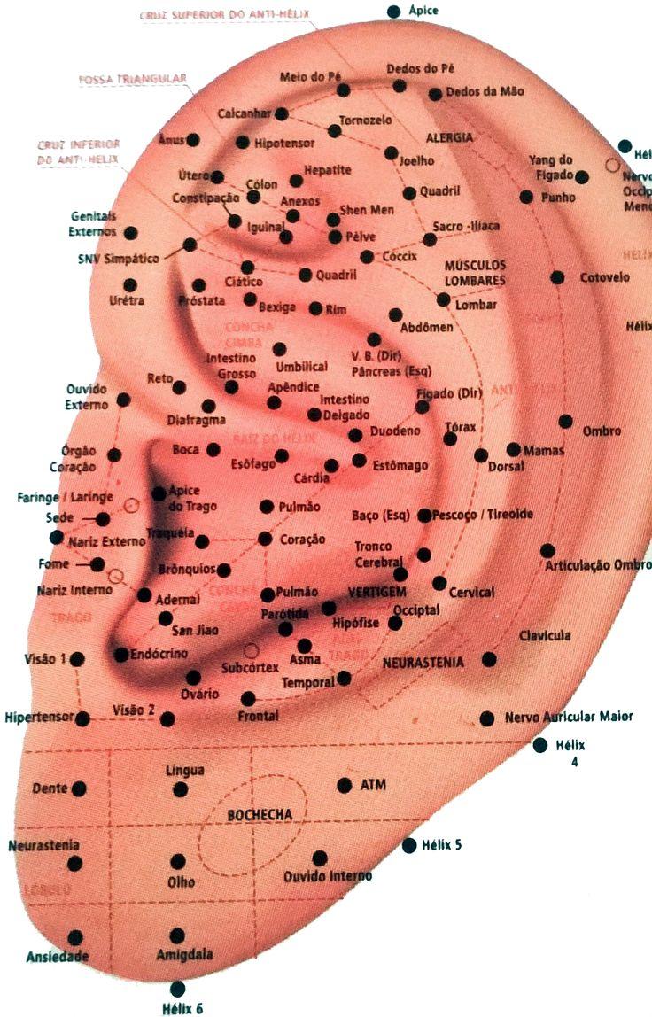 Os Benefícios da Auriculoterapia | Laços e Babados