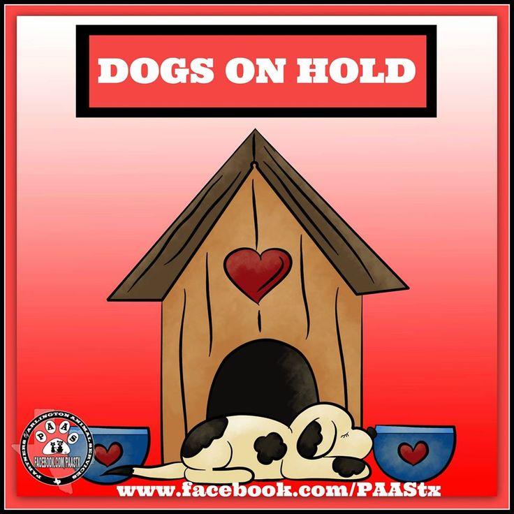 Arlington Dog Adopt