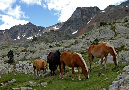 The Pyrenees Travel Guide | Fodors Travel Guides--LOOK AT ALL THE HAFLINGERS!!!