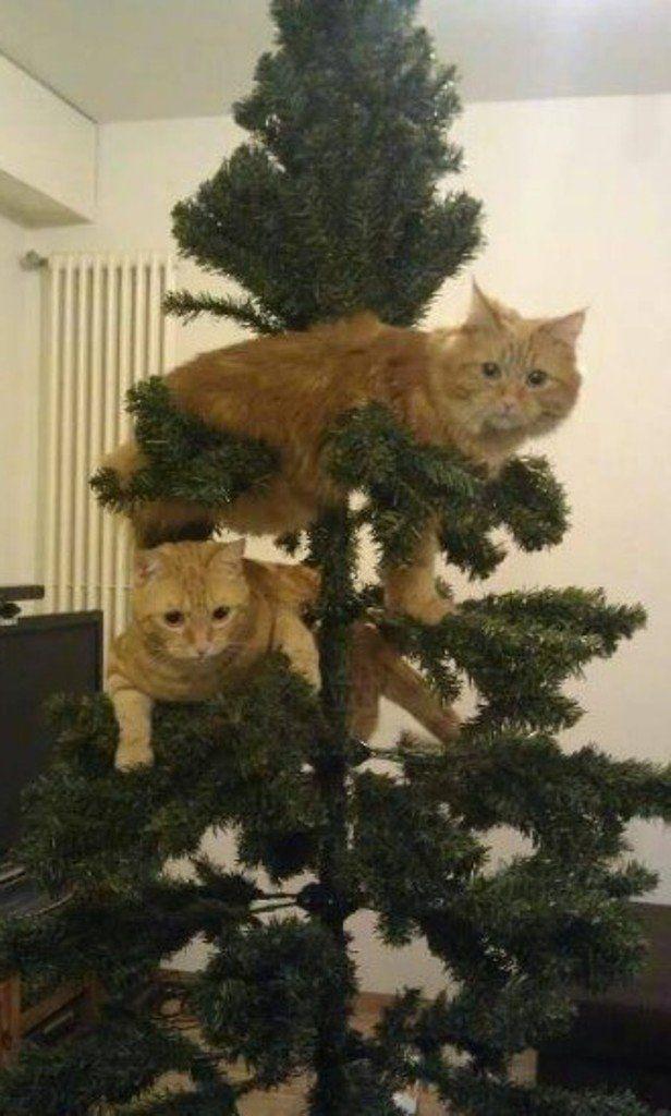 дом коты и елки прикольные фото местности произошло из-за