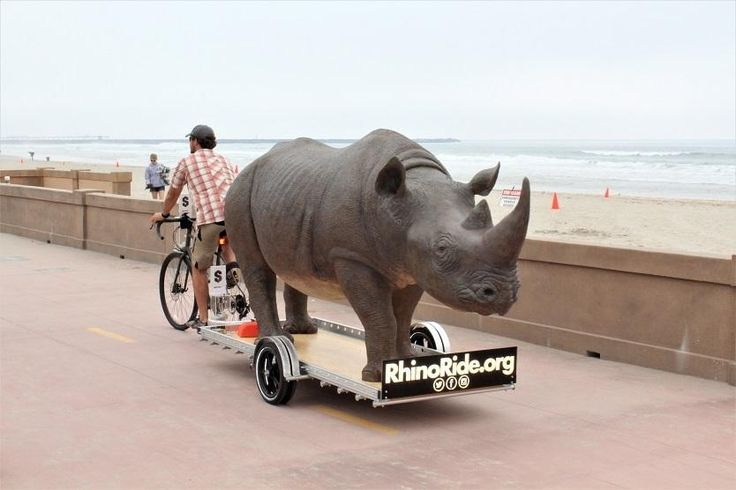 """One man, a bike and a life-sized fibreglass rhino: lifelong environmentalist, Matt Meyer, will be cycling along the West Coast of the USA, a distance of roughly 3,000 kilometres, while towing a life-sized fibreglass rhino! """"The Long Ride to Free Them,"""" taking place from 17 April to 17 June 2017, aims to raise much-needed awareness and funds for rhino conservation."""