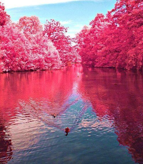 The Pink Lake! Australia! ❤