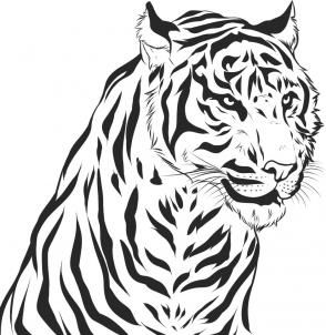 how to draw a realistic tiger step 7