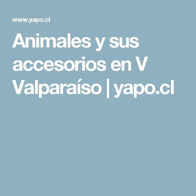 Animales y sus accesorios en V Valparaíso | yapo.cl