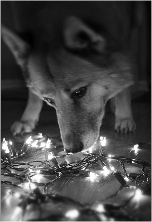 Fidose of Reality Holi-dog photo contest contestant