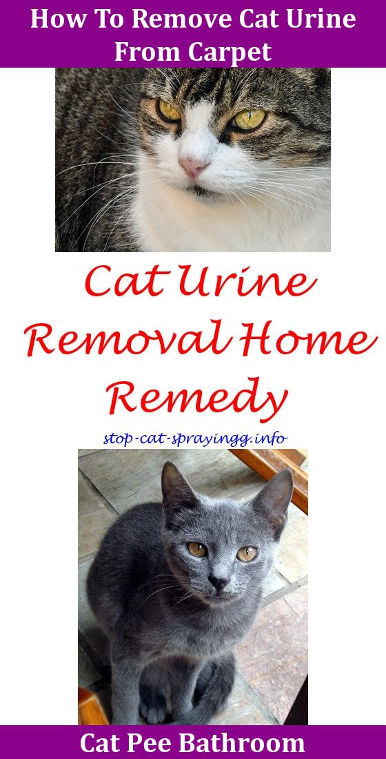 How To Remove Cat Urine From Carpet Home Remedy Www
