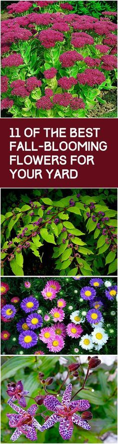11 absolutely stunning ideas for fall flowers throughout your yard. A must for any garden!