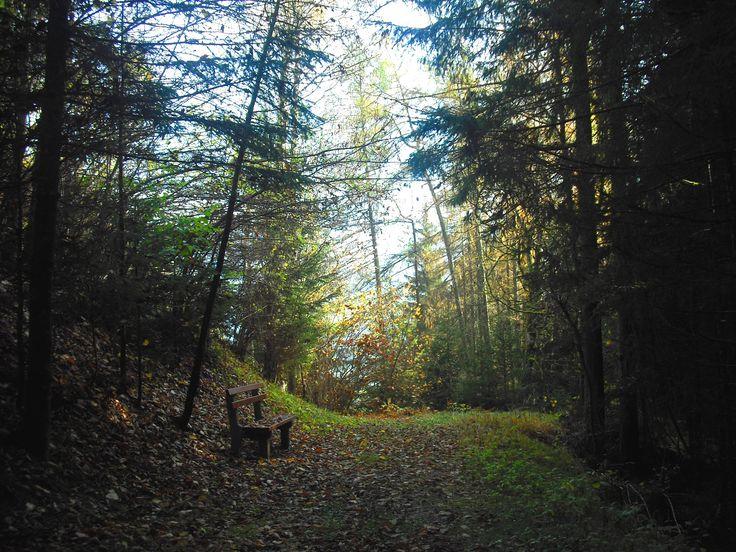 Im Wald....Austria