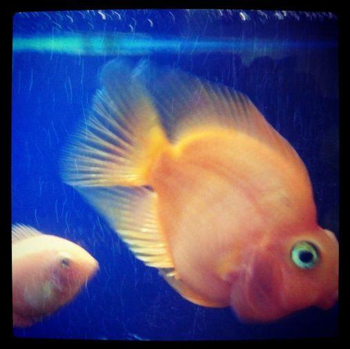 A1QA fish. They're pretty shy on Mondays