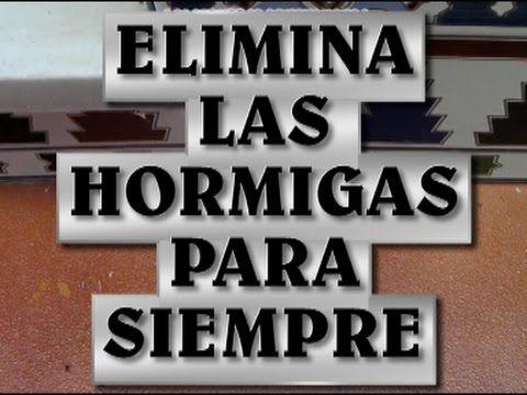ELIMINAR HORMIGAS DE MANERA ECOLOGICA