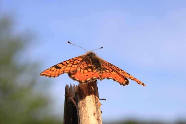 Butterfly resting on a Plant, against Blue Sky - Public Domain Photos, Free Images for Commercial Use