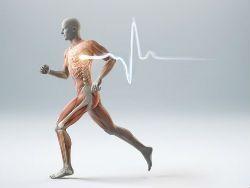 Новость на Newsland: Энергичные упражнения - ключ к долголетию