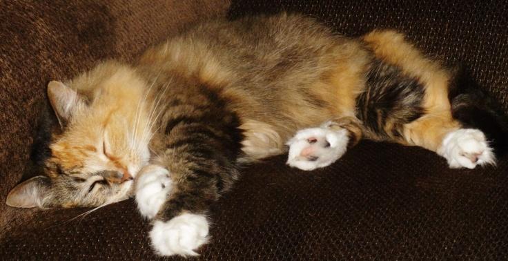 Sleepy kitty!