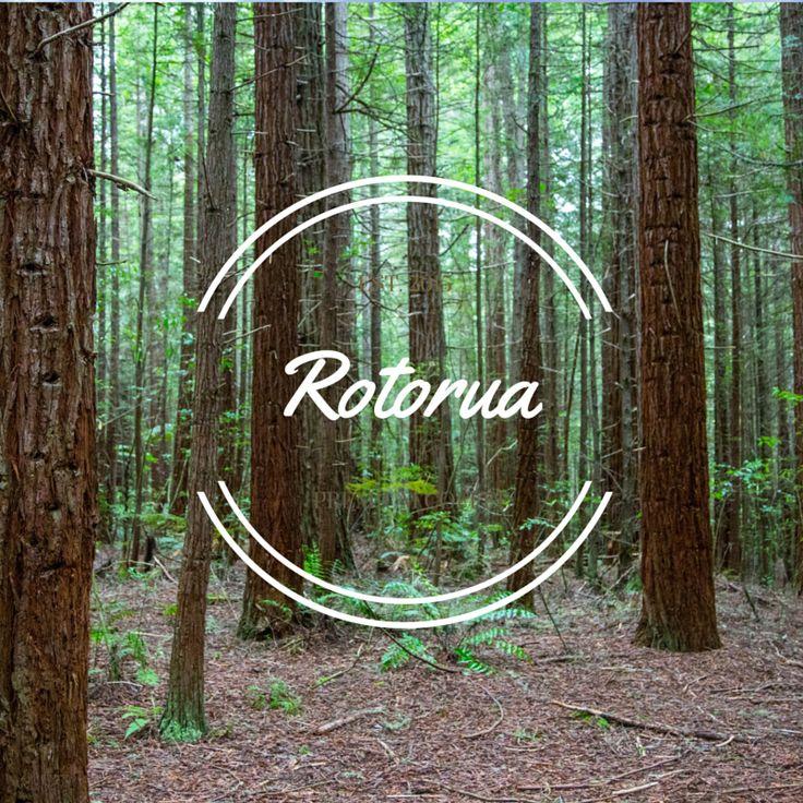 Redwoods, Rotorua, New Zealand