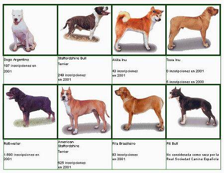 Razas de perros peligrosos - Blog de mascotas de PerrosGatosymas.es