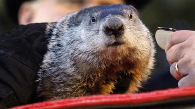 "The handlers of Pennsylvania's most famous groundhog, Punxsutawney Phil, say the furry rodent has failed to see his shadow, meaning he has ""predicted"" an early spring."