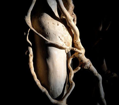 ivy wood