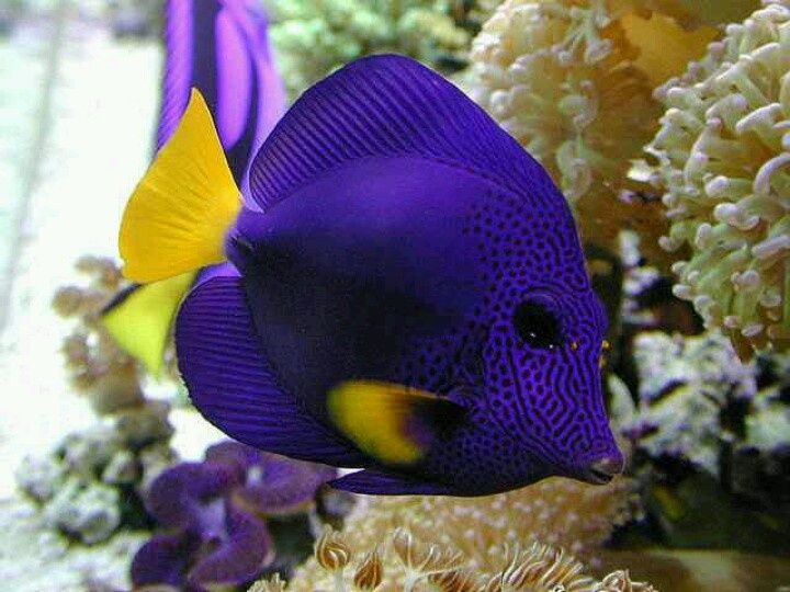 Saltwater fish ocean new aquariumist freshwater vs for Saltwater reef fish