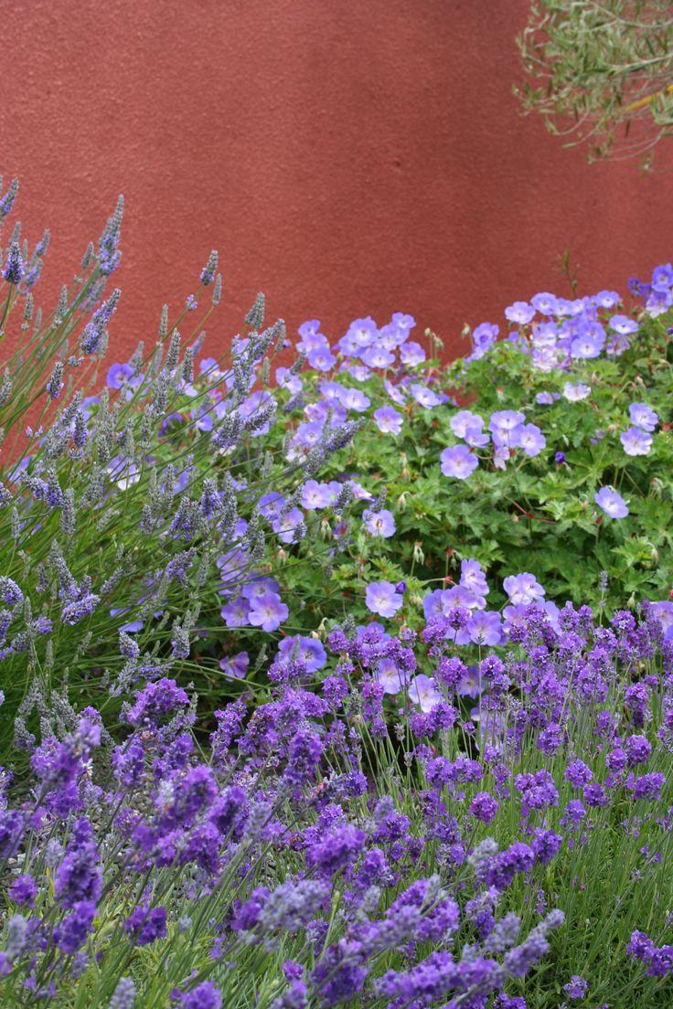 Iconic Tuscan Planting