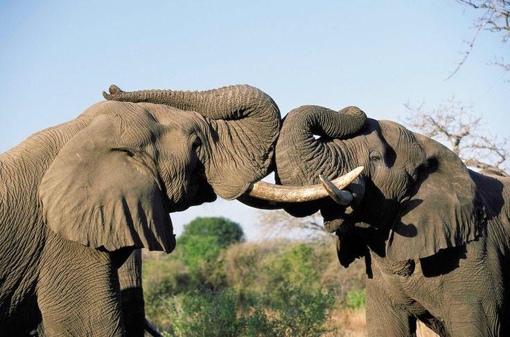 17 Best ideas about Elephant Wallpaper on Pinterest  Elephant background, Elephant phone