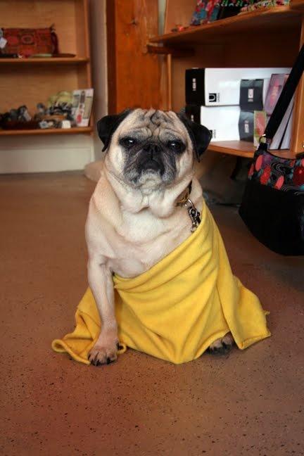 7 Best Images About Buddhist Pug On Pinterest Buddhist