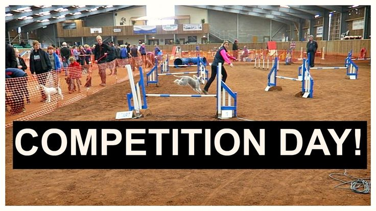 Dog agility competition 2016