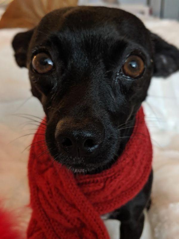 Dogs For Adoption Petfinder Dogs Dog Adoption Dog Rocks