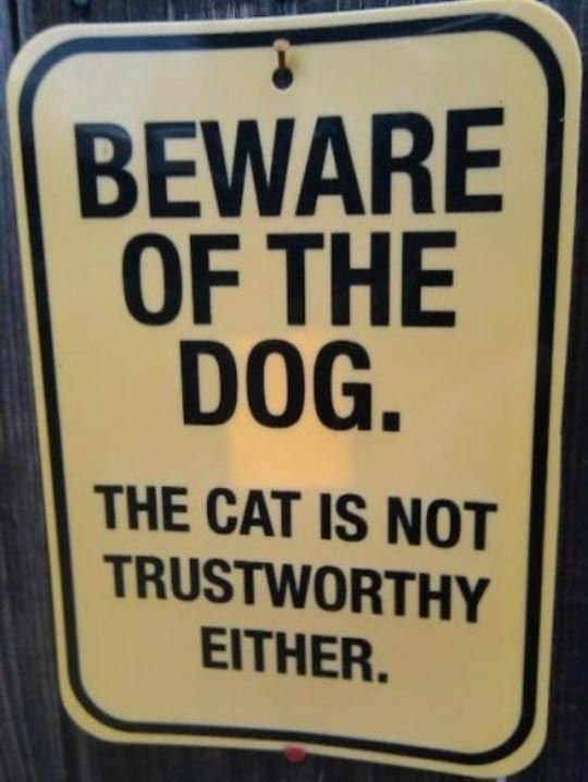 The Cat is Not Trustworthy Either.