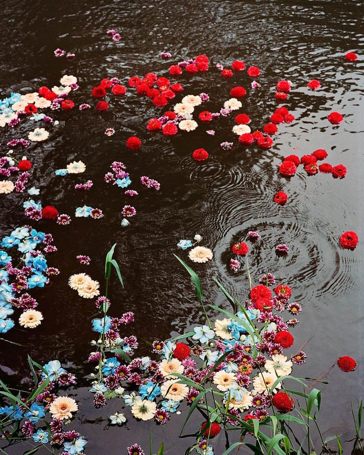 картинки раскиданные цветы