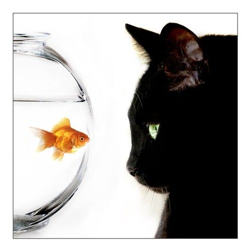 17 best images about cat fish capers on pinterest dinner for What does cat fishing mean