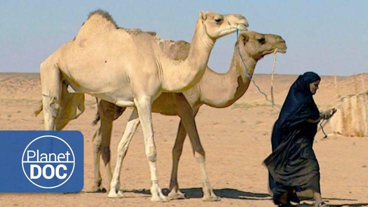 El Desierto | Nómadas del Sahara