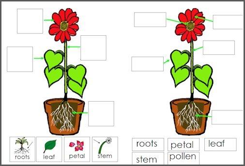 2 Flower Worksheets For Early Elementary Homeschool
