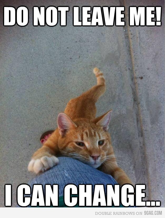 a04da979332b1d3078e344a51daabeaa funny cats funny animals 12 best cats are smarter than humans images on pinterest funny
