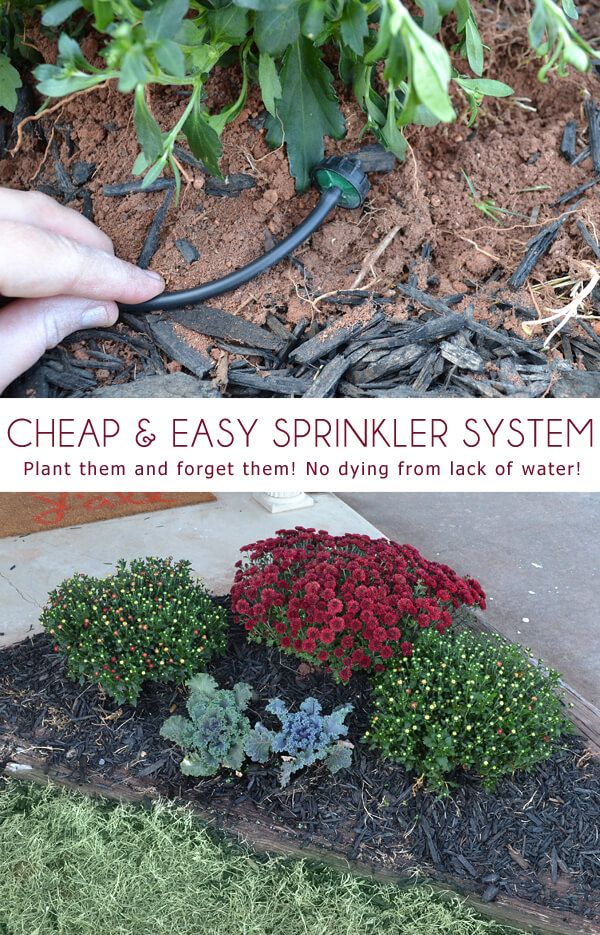 Make this cheap & easy sprinkler system! Plant them and forget them! No…