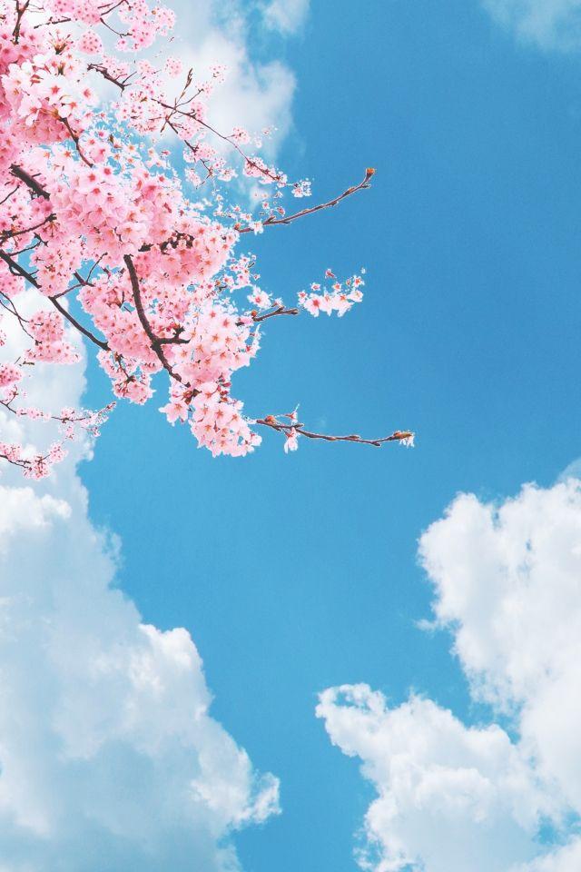 ฟ าญ ป นเร ยบง ายสด Japanese Background Sky Aesthetic Best Background Images